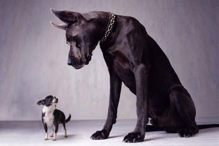 hogyan keresnek az őrző kutyák sok pénzt